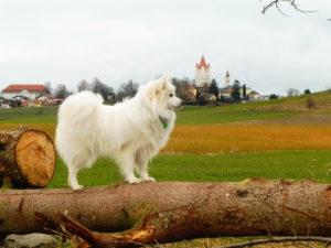 Benika auf Baumstamm