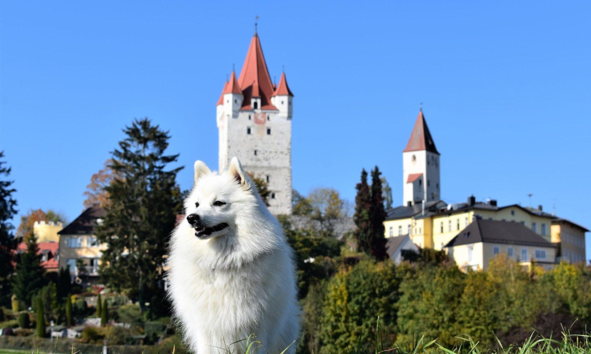 von der Haager Schlossturmspitze